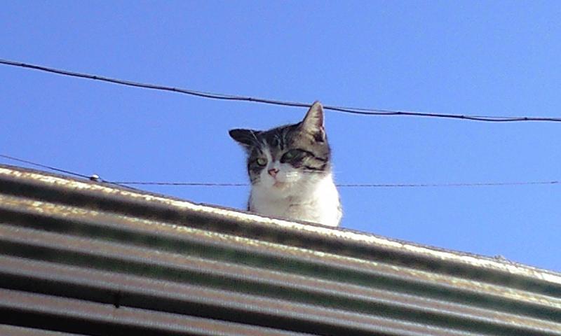 本日、猫日和