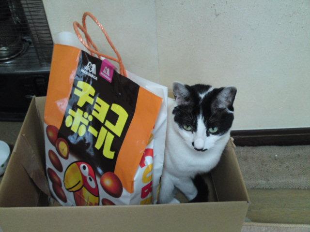 猫はなぜ箱に入るのか?